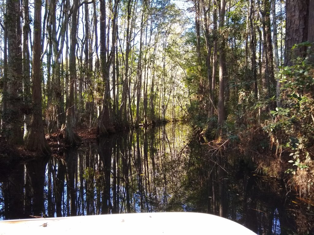 Okenfenokee swamp boat tour